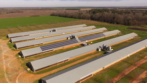 Lowering Your Farm's Costs, Solar has Arrived for Poultry Farming