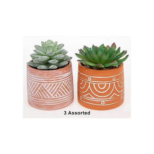Decorative Succulent in a Pot