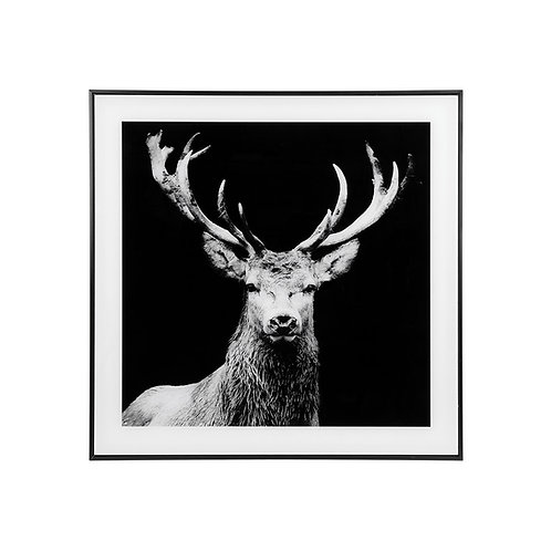 Large Stag Picture