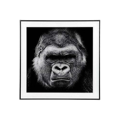 Large Gorilla Picture