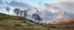 Birches Panorama