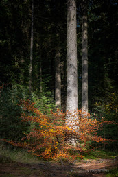 Hermitage Autumn