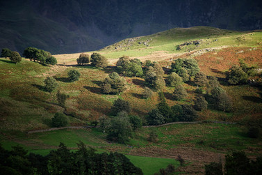 Hillside Spotlight