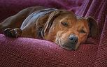 Resting_DSF5754.jpg