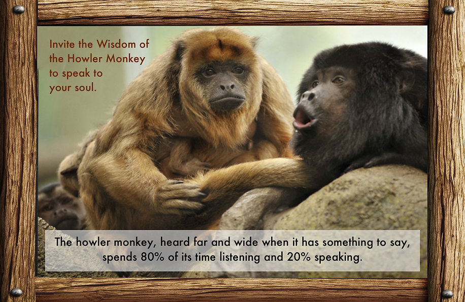 messages, lessons, nature, howler monkeys, one is quiet, one is talking