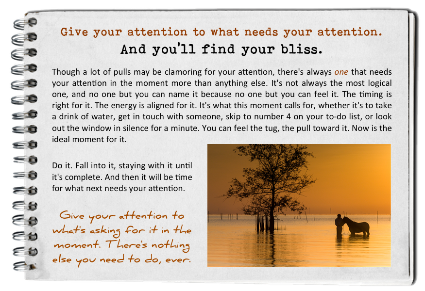 find_your_bliss_give_it_attention.png