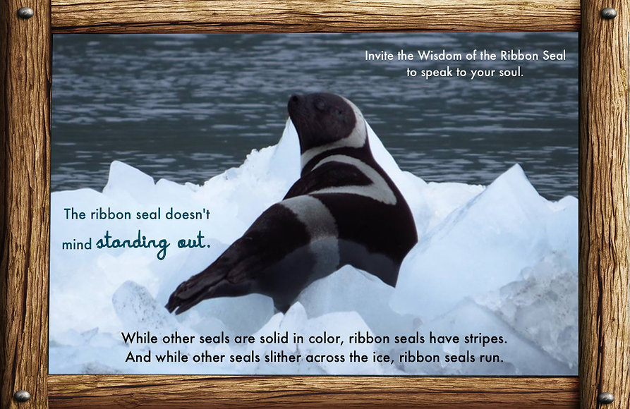 messages and lessons from nature and animals, ribbon seal, ice, water, don't be afraid to stand out, wisdom of the ribbon seal