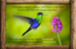 Nature_speak_hummingbird.jpg