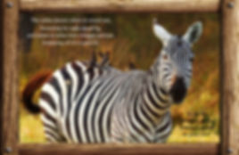 Nature_speak_zebra.jpg