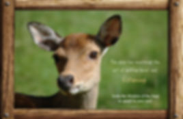 messages and lessons from nature and animals, interesting fact, deer wisdom, power, message