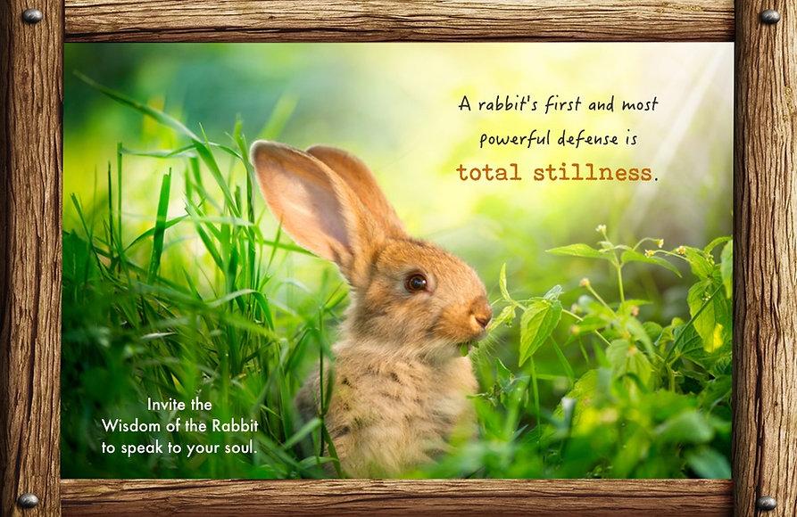 Nature_speak_rabbit.jpg