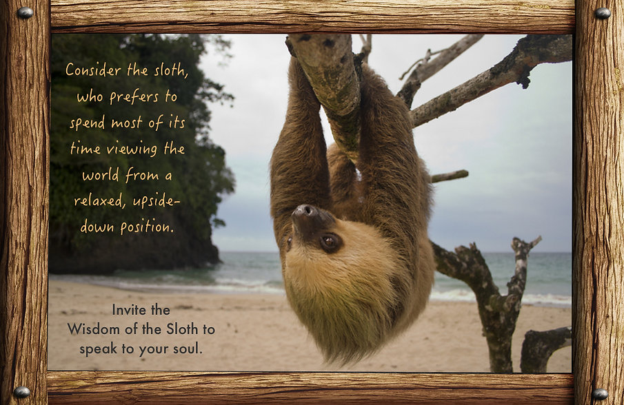 messages and lessons from nature and animals, sloth at the beach hanging upside down