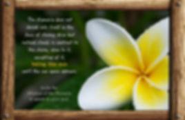 Nature_speak_plumeria.jpg