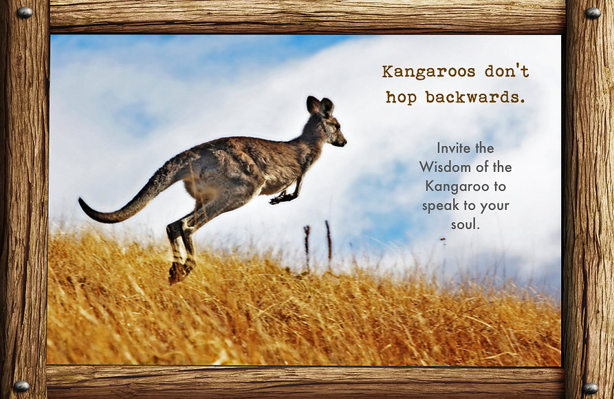 messages and lessons from nature and animals, kangaroo, wild, hopping