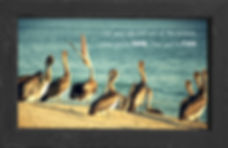 gusto cafe, photo art, inspiring picture and message, self-help, self-love, ego, pelican, water, sand, beach, free, freedom