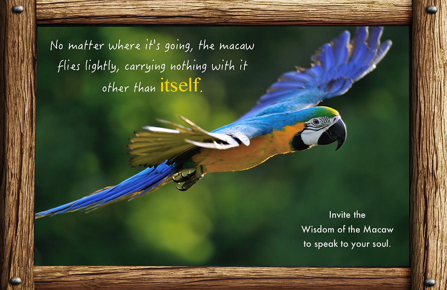 messages and lessons from nature and animals, macaw carries nothing, flying, wings spread wide, journey