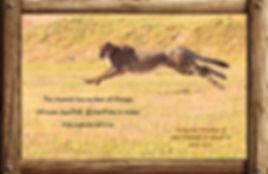 Nature_speak_cheetah.jpg