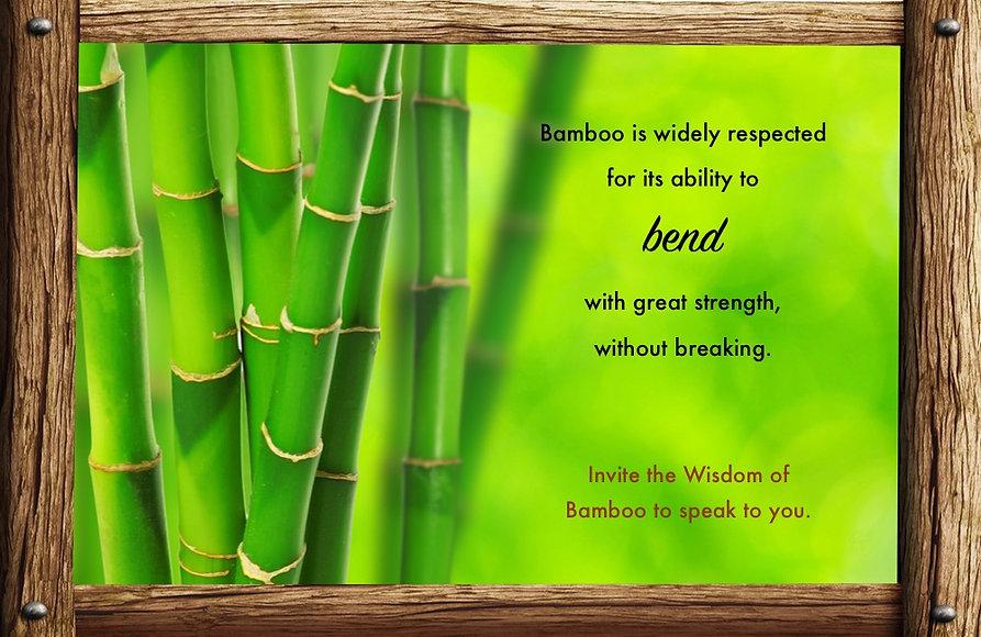 Nature_speak_bamboo.jpg