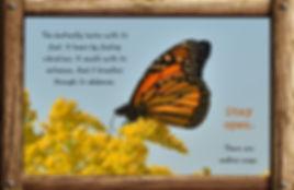 Nature_speak_butterfly.jpg