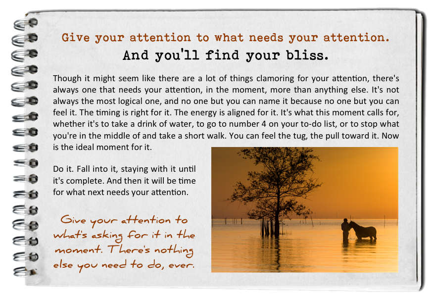 Give your attention to what needs your attention. How to find your bliss. Fall in love with today.