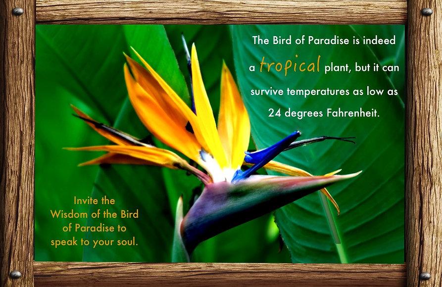 Nature_speak_bird-paradise.jpg