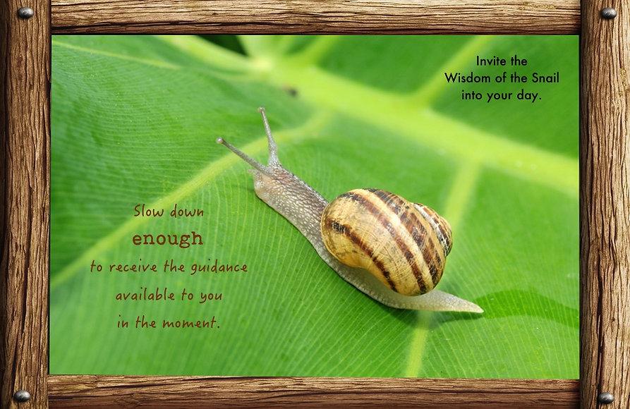 Nature_speak_snail.jpg