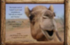Nature_speak_camel.jpg