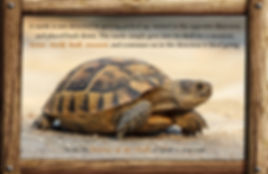 messages and lessons from nature and animals, interesting fact, turtle wisdom