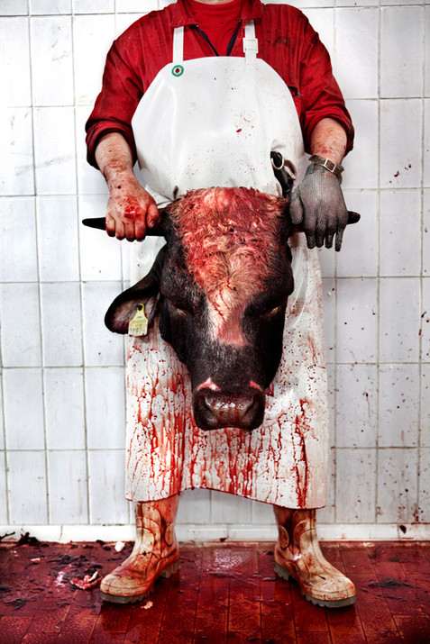 Meat worker holding a bull's head