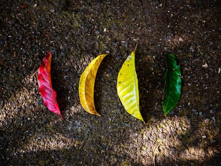 Les couleurs pour la paix