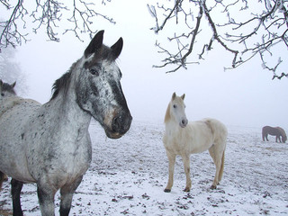 Winter Horse-Keeping