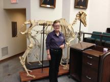 """The Biomechanics of the Rider""...2013 presentation at University of Kentucky"