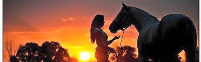 horseback riding, riding lessons, horse boarding, Chattanooga horse boarding, Chattanooga, equestrian, hunter/jumper, eventing, dressage, horse care, stable, farm, horse training, training, natural horsemanship, biomechanics, rider biomechanics