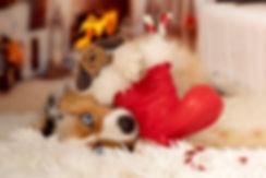 Stocking NC Dog_Christmas.jpg