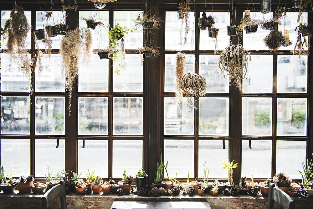 plantas_refrescar_casa