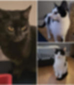 Nala, Louie and Lucy.jpg