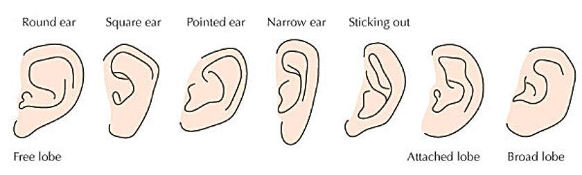 ear-shapes.jpg