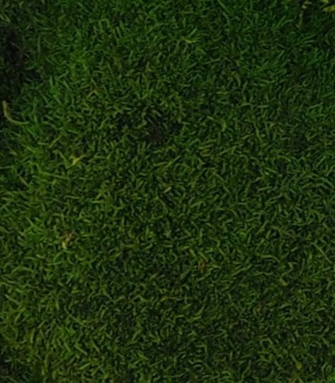Stabilizovaný plochý lesní mech - přirozeně zelená