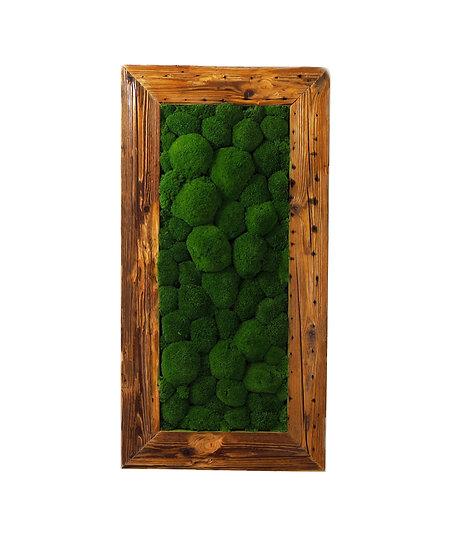 cushion moss | kopečkový mech | obraz z mechu | mechový obraz | mechovy obraz | moss art | ball moss | prague | praha |