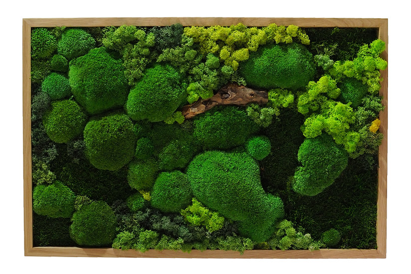 obraz mix mechu s dřevinou