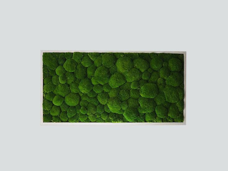 obraz Kopečkový mech 120x60 cm
