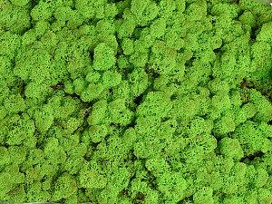 Stabilizovaný sobí mech (lišejník) jarní zelená