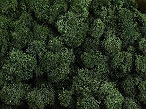 Stabilizovaný sobí mech (lišejník) tmavě zelená