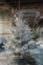 Grand Sapin Blanc.jpg