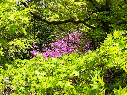Fresh Green and Azeria at Kameyama Park