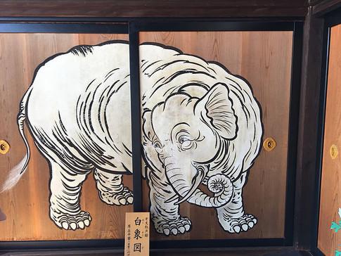 White Elephant on Cedar Door at Shokokuji Temple