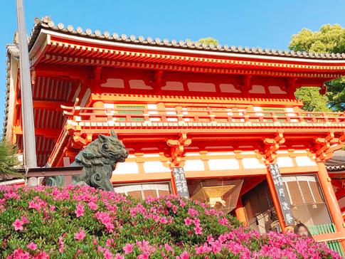 Azaleas at Yasaka Shrine West Gate