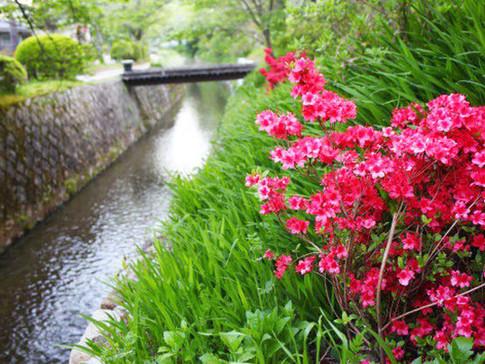 Tetsugaku-no-Michi (The Path of Philosophy) and Azaleas