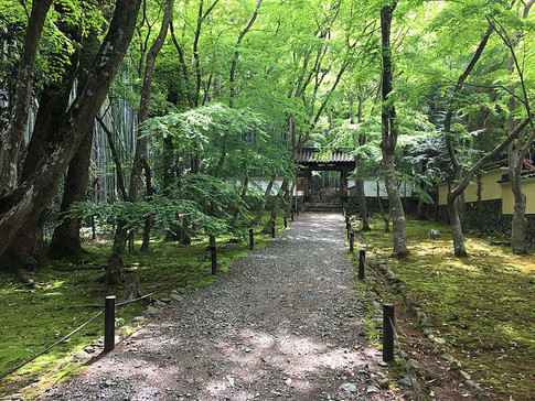 Fresh Greenery and Moss at Jizoin Temple