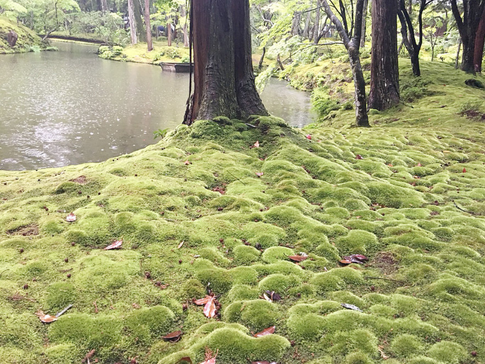 Fresh Moss in the Rain at Saihoji Temple